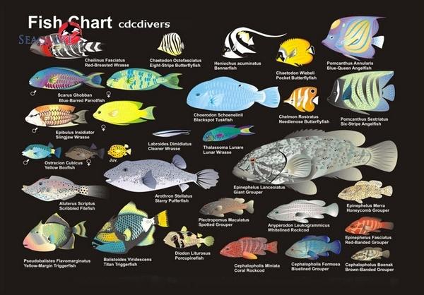 Fish Pictures  SeaExcom